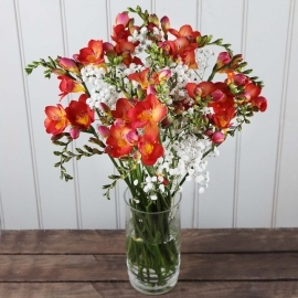 Firebird Freesias
