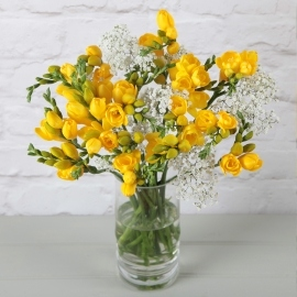 Golden Treat Freesias